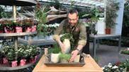 Hoe kun je de kamer stylen met planten