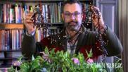 Kerststukjes maken voor buiten en voor binnen met Helleborus