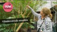 Hoe kan ik een vlinderstruik snoeien tuinieren