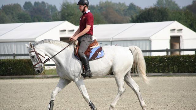 Hoe kun je een paard goed aan de teugel rijden?