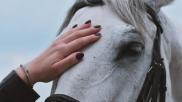 Hoe kun je paarden op een paardvriendelijke manier zadelmak maken Deel 1