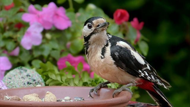 Hoe kun je een tuin vogelvriendelijk maken?