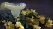 Margarita recept hoe kun je een eenvoudige en heerlijke Margarita cocktail maken