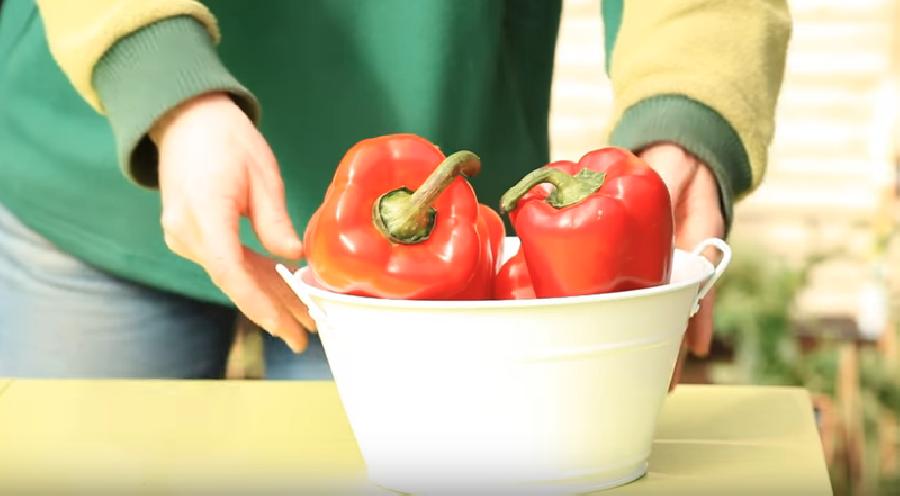De paprika's oogsten