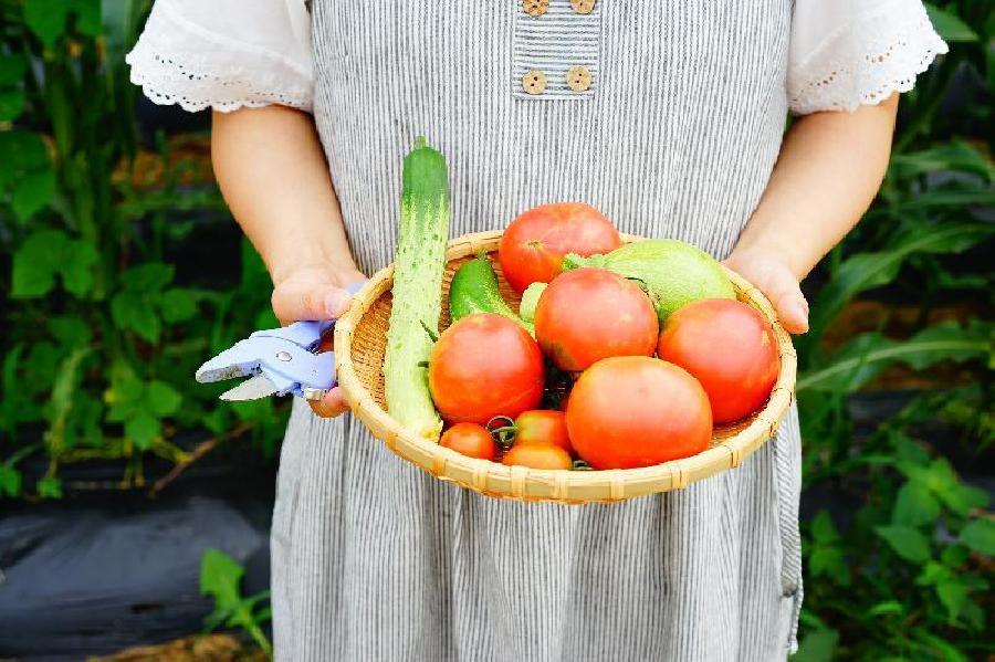 Verzorging van de planten en zaden