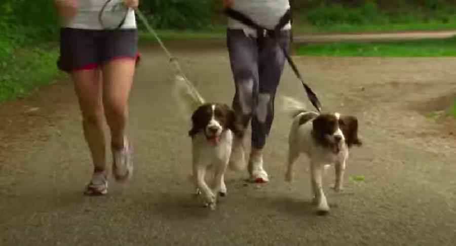 Welke hardloop hondenriem gebruik je?