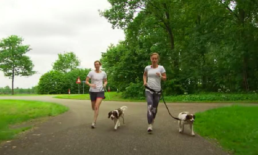 Met welk type hond kun je hardlopen?
