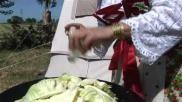 Hoe kun je Poolse kip met kool maken