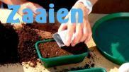 Hoe kun je planten zaaien Belangrijke zaaitips voor beginners