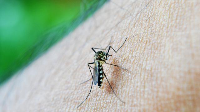 Hoe kun je malaria voorkomen en wat zijn de klachten bij deze ziekte?