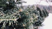 Hoe kun je de juiste kerstboom kopen Tips en info