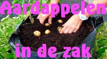 Zelf groenten kweken zonder moestuin aardappelen in zak kweken