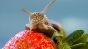 Slakken bestrijden in tuin of moestuin een slakkenval zelf maken en andere diervriendelijker methoden