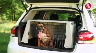 Reizen met je hond hoe neem je een hond veilig mee in de auto