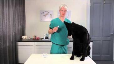 Honden verzorging hoe kun je de tanden poetsen van een hond