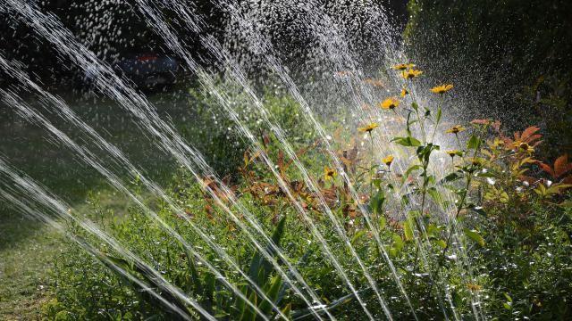 Eenvoudige tips voor waterbesparing in de tuin.