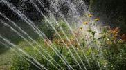Eenvoudige tips voor waterbesparing in de tuin