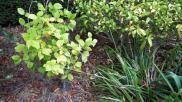 Wat kun je gebruiken als mulch voor je tuin