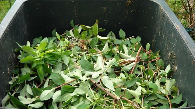 Wat is compost, waarvoor en hoe gebruik je het?