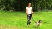 Hardlopen met de hond opbouwen en belangrijke tips