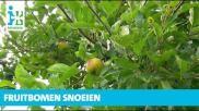 Hoe moet je een appelboom snoeien