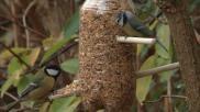 Hoe kun je een voedersilo voor vogels zelf maken