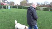 Hoe kan ik mijn hond leren wandelen zonder trekken