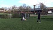 Hoe kan ik mijn hond het commando HIER leren