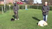 Oefening om hond rustig te krijgen op bijvoorbeeld een terras