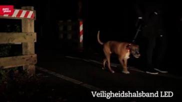 Hoe zorg je voor goede verlichting bij het uitlaten van je hond