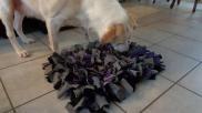 Hoe kun je zelf een snuffelmat maken voor je hond