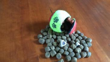 Hoe maak je een hondenspeeltje van een tennisbal