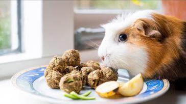 Hoe kun je hamster cavia of konijnen snoepjes maken