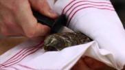 Hoe kan ik een oester openen
