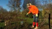 Hoe moet je struikrozen snoeien tuinieren