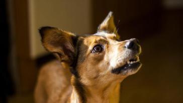 Hoe kun je een hond afleren iets van het aanrecht te stelen