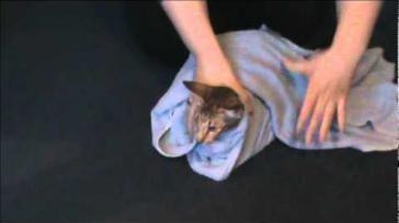Hoe kun je jouw kat probleemloos een pil geven