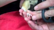 Hoe kun je de nagels van je cavia knippen