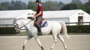 Hoe kun je een paard goed aan de teugel rijden