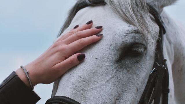 Hoe kun je paarden op een paardvriendelijke manier zadelmak maken?