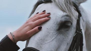 Hoe kun je paarden op een paardvriendelijke manier zadelmak maken