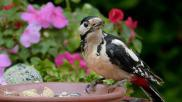 Hoe kun je een tuin vogelvriendelijk maken
